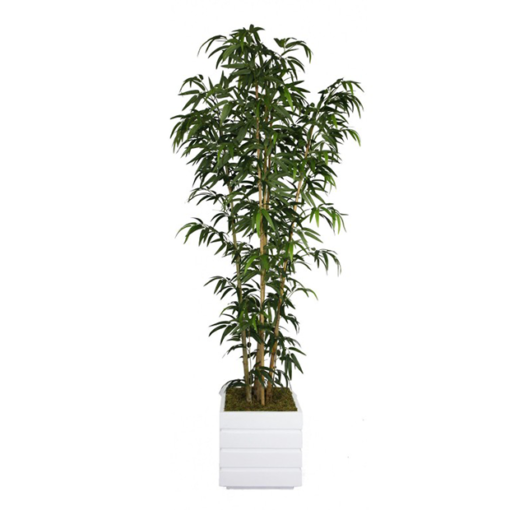 bamboo-tree-in-white-planter