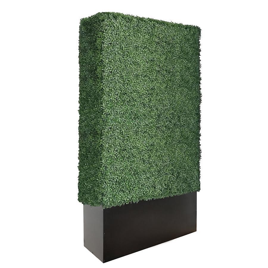 Boxwood Hedge 8ft