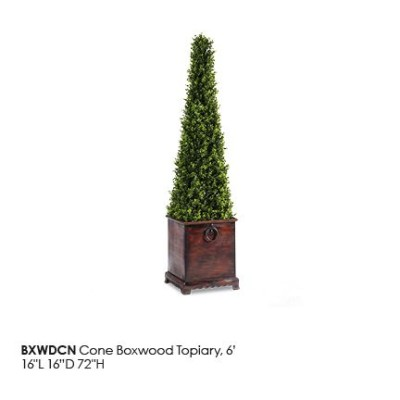 BXWDCN_ConeBoxwood_Topiary