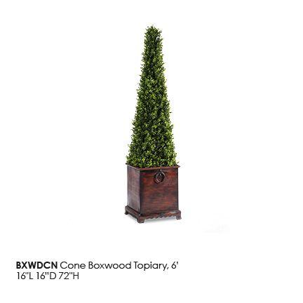 BXWDCN_ConeBoxwood_Topiary