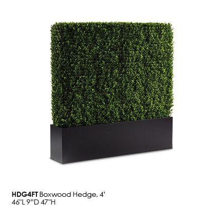 HDG4FT_Boxwood_Hedge